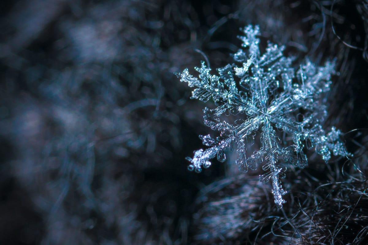 Winter Solstice: Into the Dark
